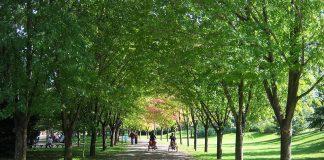 orevi drvoredi ореви дрвореди