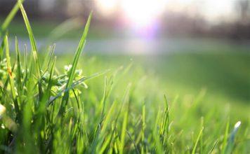 treva трева